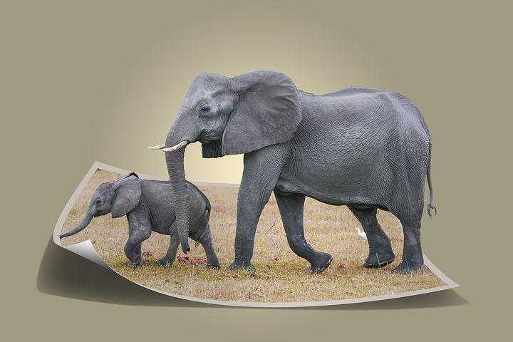 éléphants éléphant limite limites